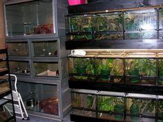Geckodan » Danny Brown » Housing