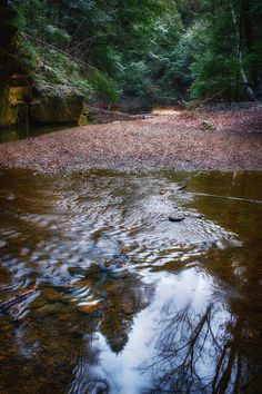 Centered - Stream along trail from Cedar Falls to Old Man's Cave in Hocking Hills Ohio by Jim Crotty