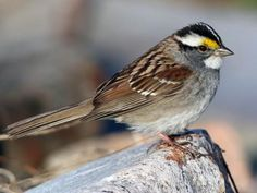 Bombay Hook, DE on 01-23-21 Sparrow Nest, Sparrow Bird, The Happy Prince, List Of Birds, Bombay, Backyard Birds, Garden Birds, Backyard Plants, Bird Species
