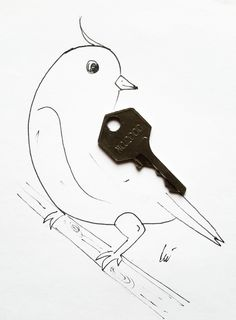 #bird #key