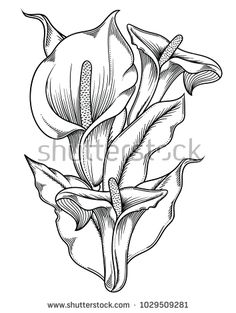 Set of spring flowers daffodils isolated on white