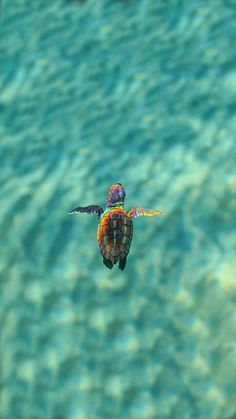 Muero de amor I love the simple turtle as the subject but also the inclusion of the rainbow reflecting on the turtle is amazing Cute Little Animals, Cute Funny Animals, Cute Dogs, Tier Wallpaper, Animal Wallpaper, Nature Wallpaper, Sea Turtle Wallpaper, Ocean Wallpaper, Glitter Wallpaper