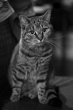 The domesticated Cat by derRuedi, via Flickr