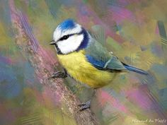Bird photos turned into bird art, and printed as fine art prints on stretched canvas. Avaible to order on my website. Abstract Photos, Abstract Canvas, Wall Art Prints, Fine Art Prints, Photo To Art, Art Prints Online, Bird Artwork, Stretched Canvas, Creative Art