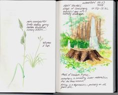 nature field journal - Google Search