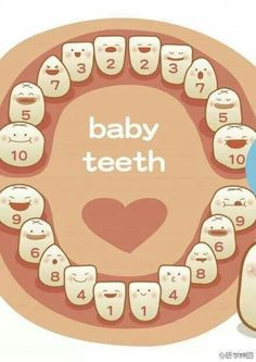 baby teeth: for the best dental assistant in the world & best twin mommy! The Babys, Baby Health, Kids Health, Shower Bebe, Baby Development, Everything Baby, Baby Kind, Baby Milestones, Baby Hacks