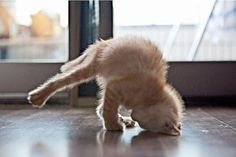 haha cat yoga is awesome