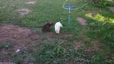Kitty and bunny playing tag