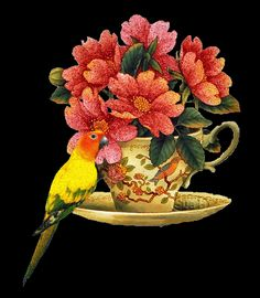 Collection Of Gifs & Flowers' Casita Illusion Photos, Bird Gif, Flowers Gif, Coffee Images, Gif Collection, Glitter Graphics, Budgies, Gifs, Bird Feathers