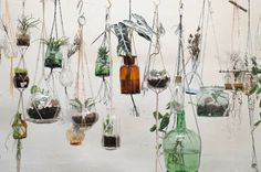 "Bottled Gardens"" by EARTH.ROPE.POT.PLANT"