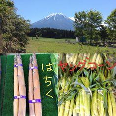 おはようございます! 今日は雲がなくとてもいい天気です(^^) 富士山もスッキリ見えます。 雪もだいぶ溶けましたよー!!!       今日は野菜コーナから ヤングコーンとはちくが入りました‼  ... 詳しくは http://asagiri-kogen.com/73417/?p=5&fwType=pin