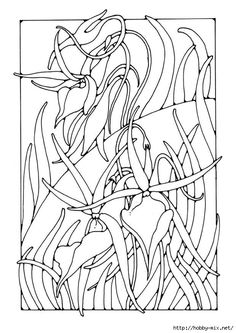Malvorlage Orchidee - Bild - Coloring pages - Colouring Pics, Flower Coloring Pages, Mandala Coloring, Coloring Books, Free Coloring Sheets, Adult Coloring, Orchid Images, Crochet Leaves, Book Images