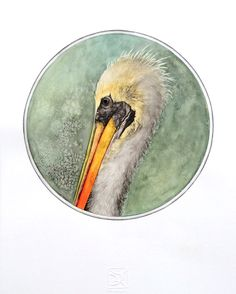 Pelícano  Chilean bird Watercolor Lorena Fröhlich Mohr