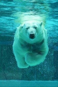 Polar underwater