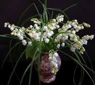 Lily of the valley-tears of Our Lady. My mum's favourite/