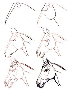 Learn to draw step by step: animal - horse head (side view) - . - Joyeux - Learn to draw step by step: animal – horse head (side view) – … - Horse Head Drawing, Horse Drawings, Realistic Drawings, Art Drawings Sketches, Animal Drawings, Easy Drawings, Easy Horse Drawing, Horse Sketch, Animal Sketches