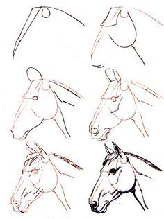 Dessiner un cheval : une tete de cheval