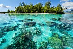Underwater coral reef next to tropical island by Martin Valigursky, via Dreamstime