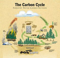 carbon an important resource on earth The carbon cycle ¦ key stage 3 ¦ chemistry ¦ earth & atmosphere (6) ¦ lesson presentation.