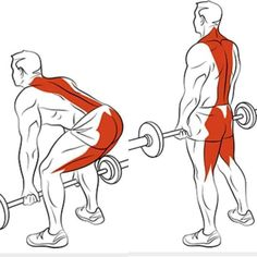 4 Back Workout Plan To Help Sculpt Sexy Back & Shoulder Fitness Workouts, Gym Workout Tips, Sport Fitness, Muscle Fitness, Mens Fitness, At Home Workouts, Fitness Tips, Health Fitness, Fitness Outfits