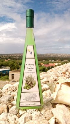 The Cadushi Distillery: Tourist attraction in Rincon, Bonaire: In the traditional distillery of Cadushy you can see how the world's only liqueur made from cactus is created right on the premises, and of course, we invite you to sample some for yourself!