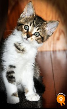 """From my friend: Toby, adopted from Capital Area Humane Society - Lansing, MI: """"Toby has brought life and smiles back into our home. Kittens And Puppies, Cats And Kittens, Kitty Cats, Baby Animals, Funny Animals, Cute Animals, Cute Animal Pictures, Funny Pictures, All About Cats"""