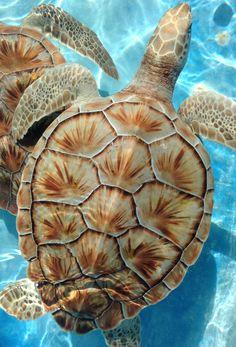 Isla mujeres , Mexico wonderful turtle