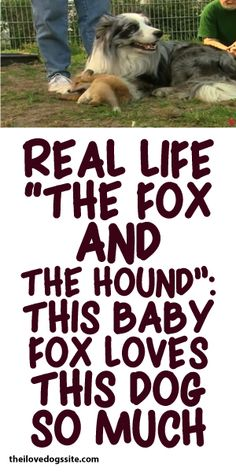 "Real Life ""The Fox And The Hound"": This Baby Fox Loves This Dog SO Much!"