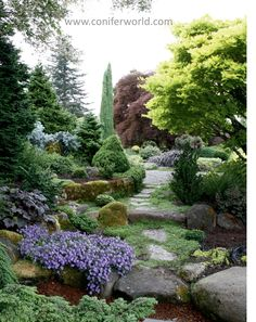 20 best Conifers images on Pinterest | Taiwan, 100m and A tree Dwarf Conifer Rock Garden Design Id E A on