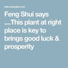 Feng Shui says .This plant at right place is key to brings good luck & prosperity Feng Shui At Work, How To Feng Shui Your Home, Feng Shui Principles, Feng Shui Tips, Metaphysical Quotes, Spiritual Quotes, Feng Shui Plants, Feng Shui History, Feng Shui Energy