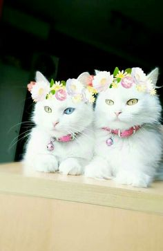 wow.... fancy cats <3<3<3<3  :D  :D