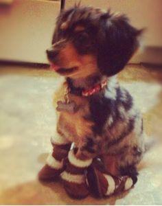 My dog. Chiweenie. Cutest thing ever.