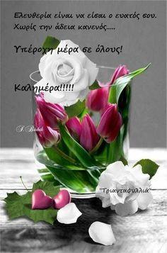 Beautiful Flowers Images, Amazing Flowers, Beautiful Roses, White Roses, Pink Roses, White Flowers, Rose Images, Flower Images, Color Splash