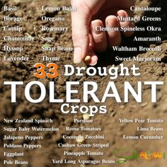 Outdoor garden Drought Tolerant - 33 Drought Tolerant Crops For Dry or Hot Climates. Patio Plants, Cool Plants, Cactus Plants, Sugar Baby Watermelon, Arizona Gardening, Gardening In The Desert, Dry Garden, Indoor Garden, Drought Tolerant Plants