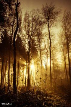 November Forest by Markus Raegi**