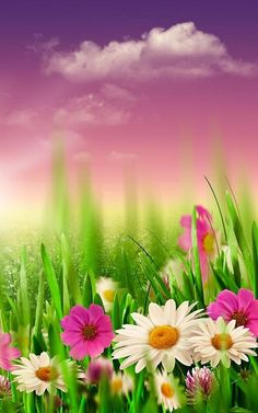 Spring by hq awesome live wallpaper Daisy Wallpaper, Spring Wallpaper, Flower Phone Wallpaper, Cool Wallpaper, Spring Images, Spring Pictures, Nature Pictures, Beautiful Pictures, Most Beautiful Wallpaper