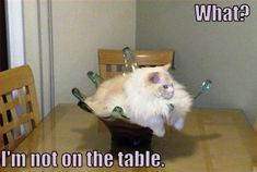 They Said I Could Be Anything...So I Became A Table Centerpiece | They Said I Could Be Anything…Cat Edition