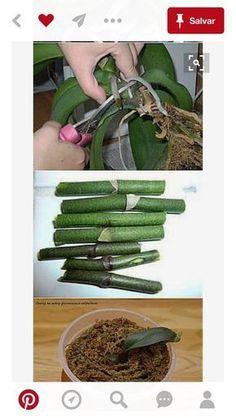 Best 10 Orchids Orchids garden Orchid plants Growing orchids House plants P Orchids Garden, Orchid Plants, Air Plants, Garden Plants, Indoor Plants, Orchid Leaves, Vegetable Garden, Growing Orchids, Growing Plants