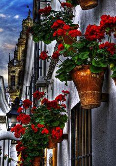 Flower street, Cordoba, Spain