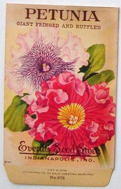 EVERITT'S SEED STORE,  Petunia 970, Vintage Seed Packet