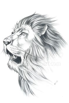 Lion Portrait Original Sketch Lion Original Art by Lunarianart, £130.00