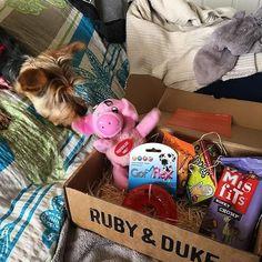 One of our many happy Ruby & Duke #Dukebox dog toy and treat customers. www.rubyandduke.com  #dogsofinstagram #dogstagram #dogs #dogsrule #doglove #doglovers #doglife #dogoftheday #doggy #doglover #doggie #dogscorner #dogofinstagram #dogsofinsta #dogwalk #dog_features #doggies #dogsandpals #dogloversofinstagram #dogdays #dogsofinstaworld #dogcrushdaily #dogslover Mis Fit, Bow Wow, Dog Walking, Dog Toys, Dog Life, Duke, Dog Lovers, Lunch Box, Puppies
