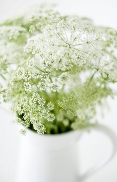 Queen Anne Lace.- my favorite flower as a child and was heartbroken when I was told it was considered a weed!