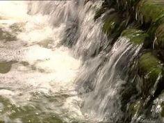 Om vatten, kretslopp och ekosystem » Gratis i Skolan - Ämnesövergripande SO/NO Om, Waves, Youtube, Outdoor, Outdoors, Outdoor Games, Youtubers, Youtube Movies, Wave