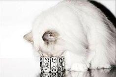 gatto curioso...di un bracciale!