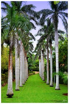 walkway of palm trees  https://secure4.marketingden.com/pmcchl2014/order.php