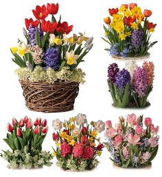 Give her Six Months of Pre-Planted Flower Bulb Gift Gardens - they ship each month from December to May