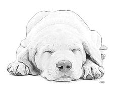 """Labrador Puppy Sketch 101"" by Dean Wittle, Hollywood, FL // Labrador Puppy Sketch by Dean Wittle // Imagekind.com -- Buy stunning, museum-quality fine art prints, framed prints, and canvas prints directly from independent working artists and photographers."
