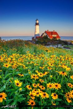 Portland Maine Lighthouse with Flower.... #Relax more with healing sounds: