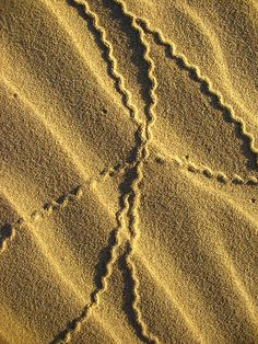 wavy tracks in the sand